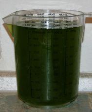 Phytoplankton, Plankton in 1 Liter