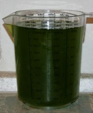 Phytoplankton, Plankton in 3 Liter